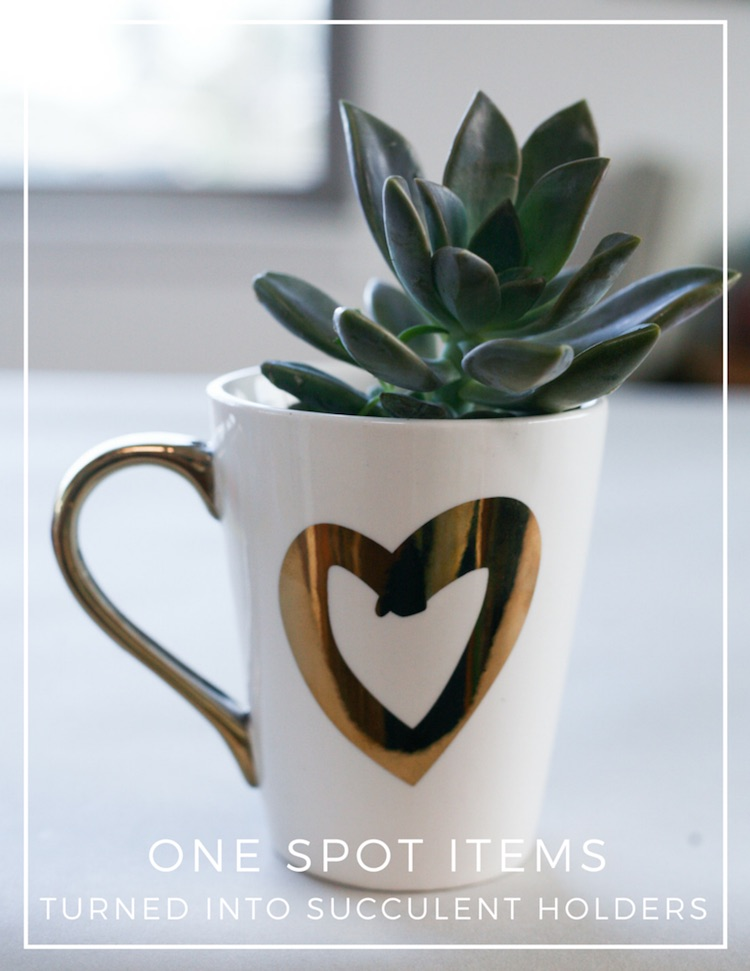 ONE SPOT ITEMS TURNED INTO SUCCULENT HOLDERS 1 (1) copy 2