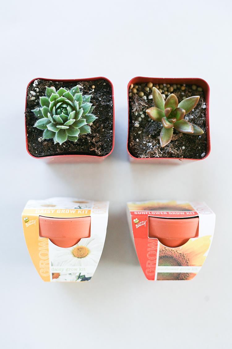 dollar-spot-planters-(1-of-1)-11