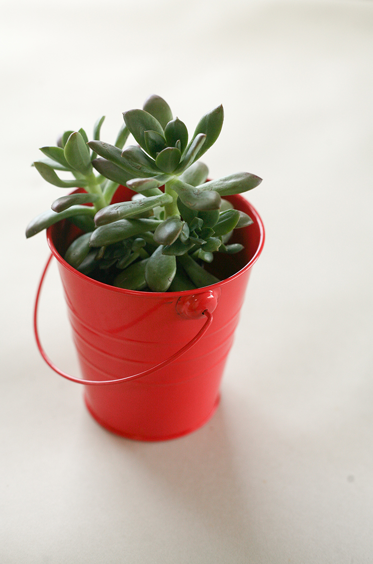 dollar-spot-planters-(1-of-1)-4