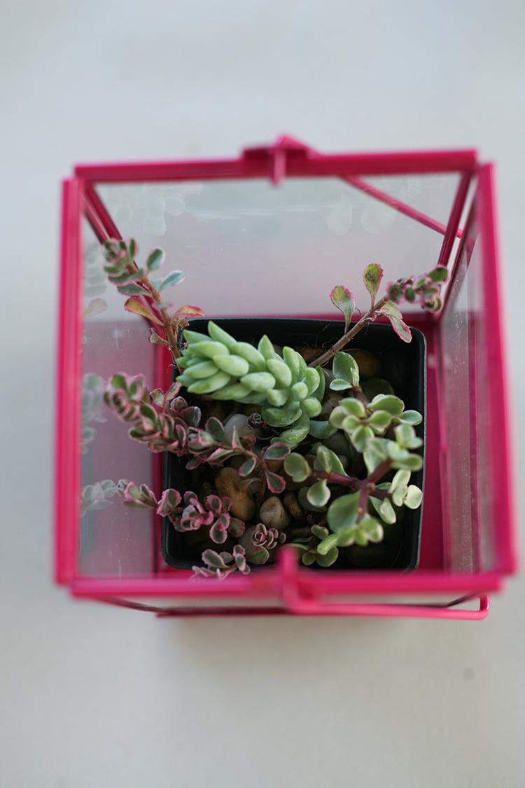 dollar-spot-planters-(1-of-1)-7