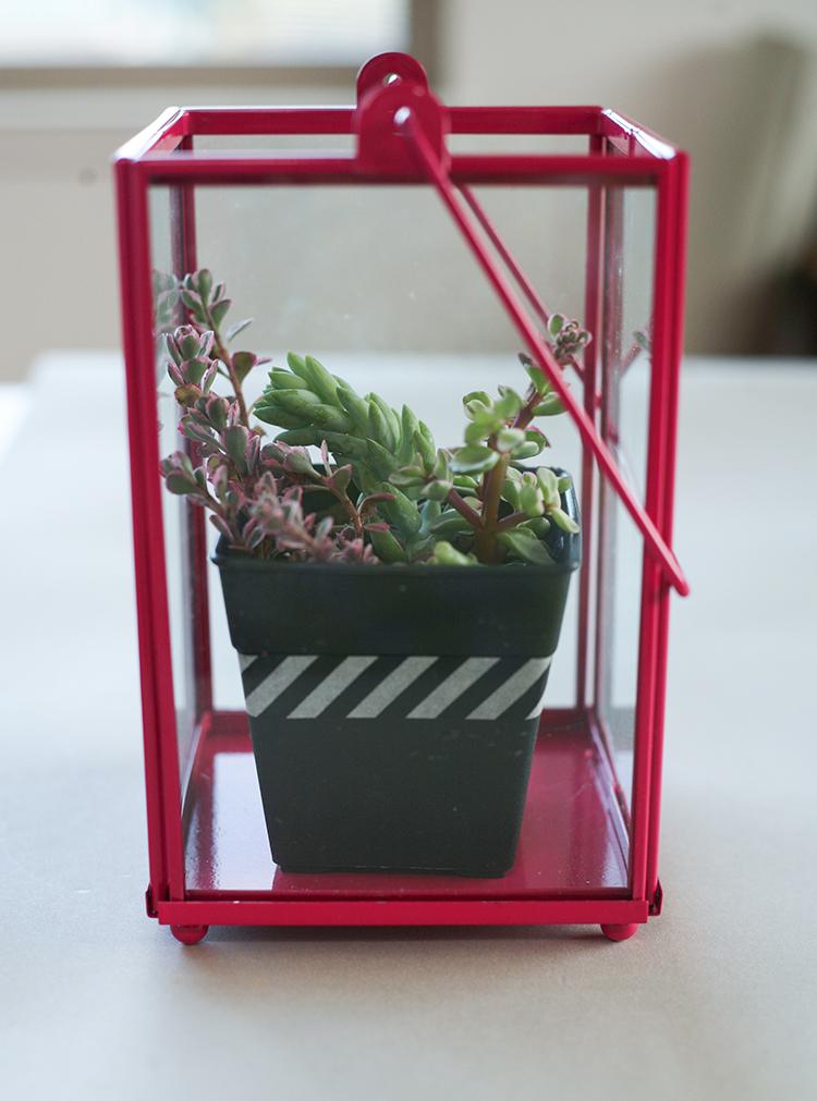 dollar-spot-planters-(1-of-1)-8