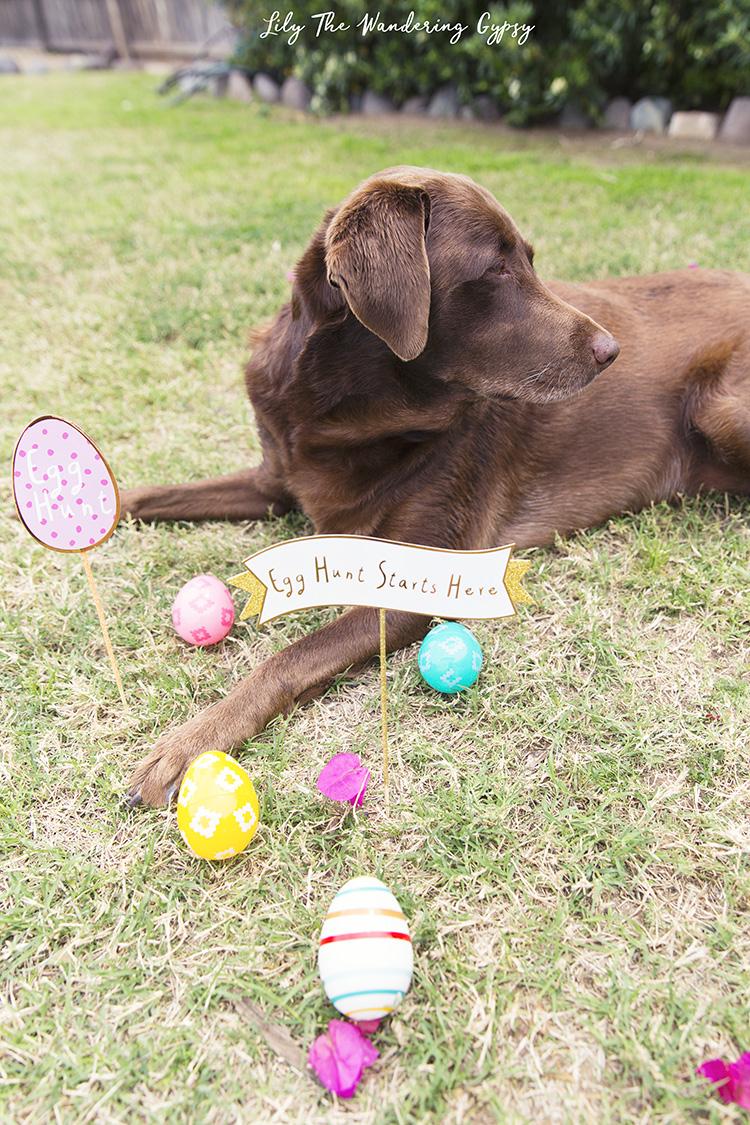 a dog friendly easter basket and a dog easter egg hunt u2013 target